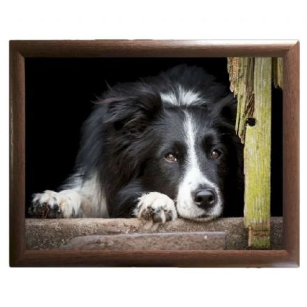 Collie Chill Out Lap Tray